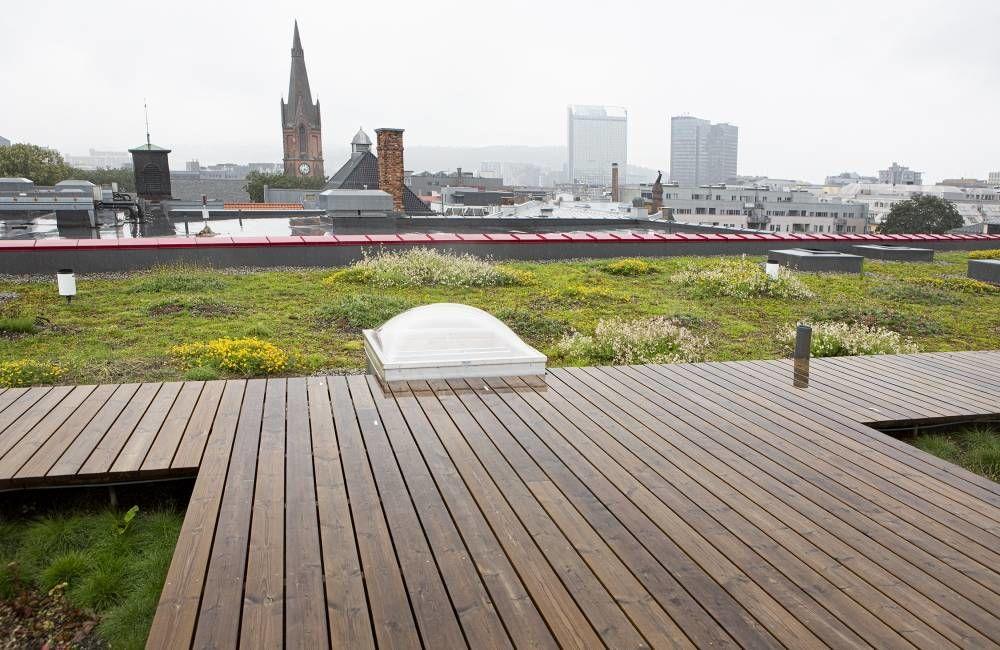 Bli med på frokostmøte hvor vi stiller følgende spørsmål: Kan vi bygge oss til mer natur i byen? Foto: esé Holte