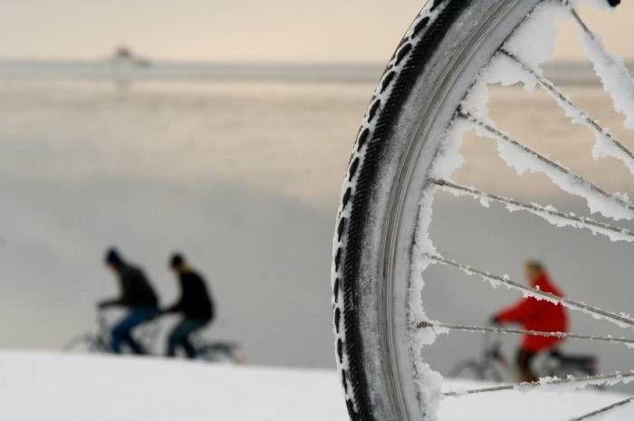 """Reinsdyr er """"sooo last year"""", i år tror vi julenissen kommer på sykkel. Er det han vi skimter mellom eikene? God (h)jul! Foto: redmar"""